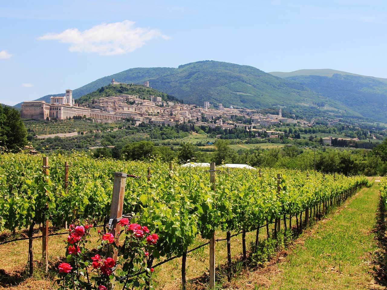 Assisi001 1